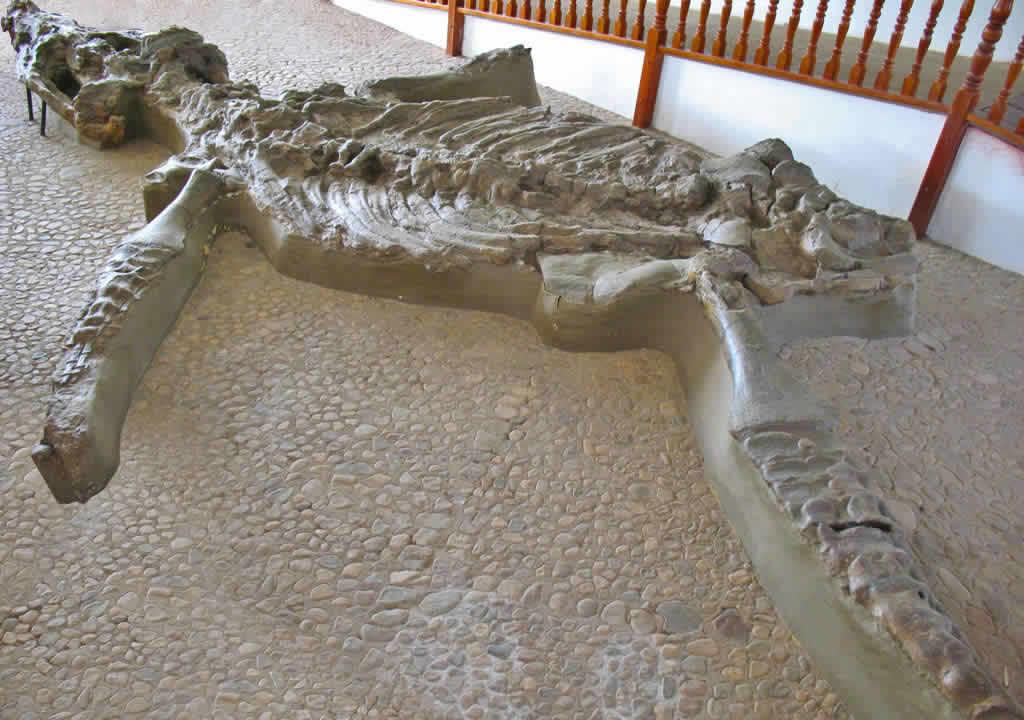 Cronosaurio de Villa de Leyva