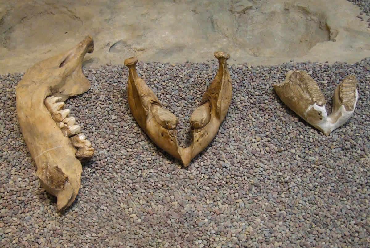 Mastodonte Villa de leyva