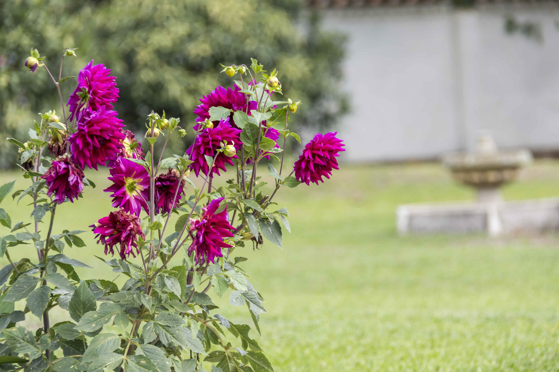 Jardines casa tamoe en villa de leyva